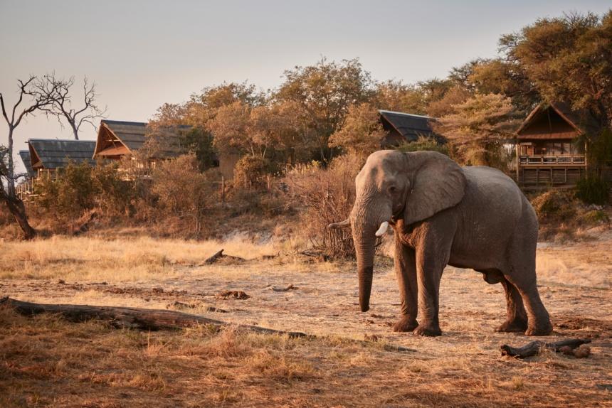 ロッジでの一コマ:Belmond Safaris, Savute Elephant Lodge, Botswana.