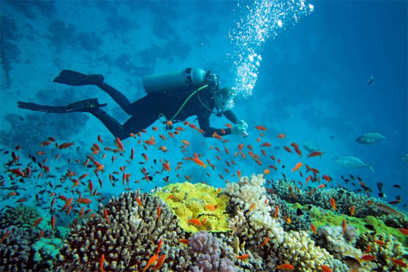 ocean-activites