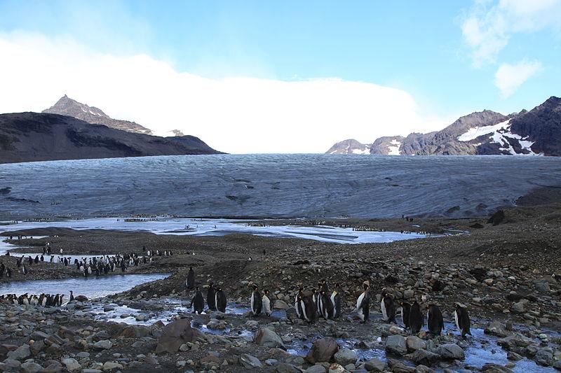 2020年12月-21年2月(5本設定):南極大陸、フォークランド諸島、サウスジョージア島ー究極の探検22泊23日(リスボン〜グラスゴー)|Msフラム-フッティルーテン