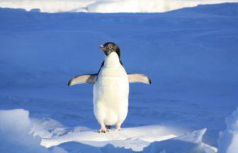 2021年1月6日:(2021年1月~2月/12本設定)最果ての秘境クルーズ南極大陸を目指す10泊11日| ル・ボレアル-ポナン