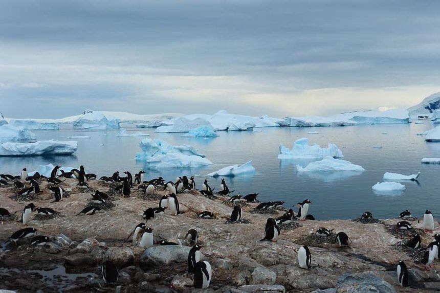 2020年12月-2021年1月(5本設定):南極ハイライトクルーズ 11泊12日(ウシュアイア〜ウシュアイア)|Msフリチョフ・ナンセン-フッティルーテン