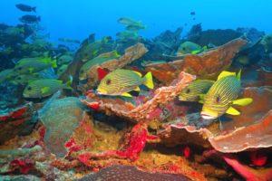 目的地探査:陸上も海中も