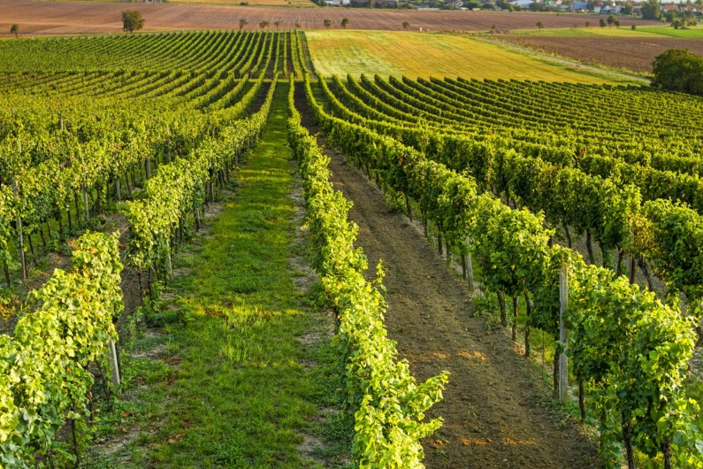 https://www.sonoma.com/businesses/?category=Things%20To%20Do&tags=wine-tours-and-sightseeing